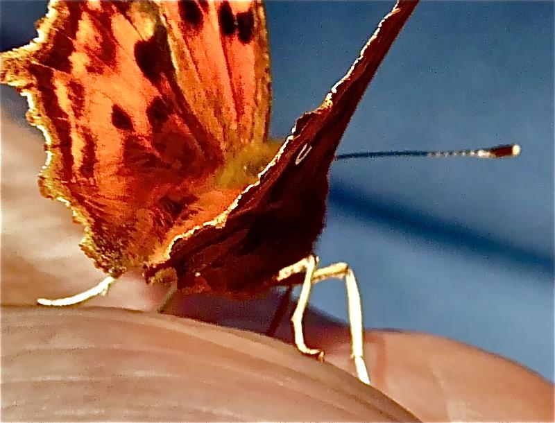 about butterflies