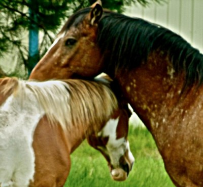 Two brown horses, seemingly in love