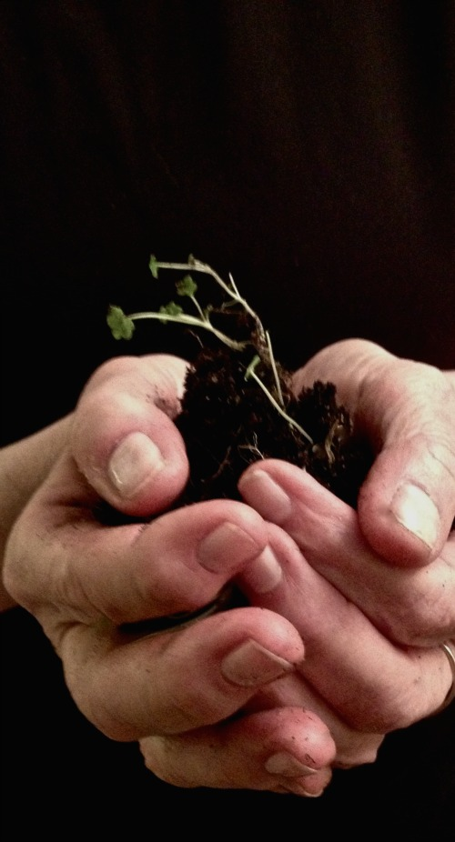 Green sprouts form a clump of dirt cupped in two hands