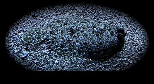 Camo, under the sea