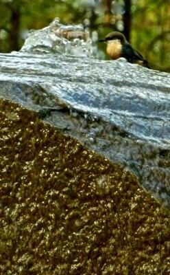 labyrinth zoomonbird