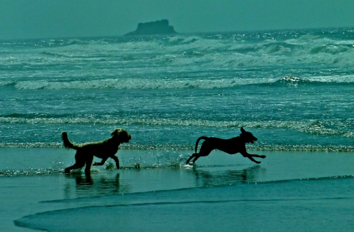 upbeat dogs romp on beach