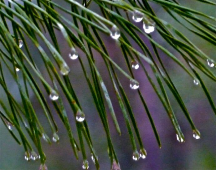 pine bling