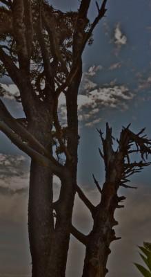 snags, at dusk
