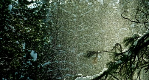 Snow Shower